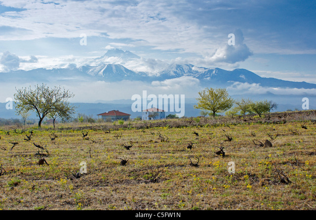 Mount Erciyes (Argaeus) looming over houses and vineyard, Central Anatolia, Turkey - Stock Image