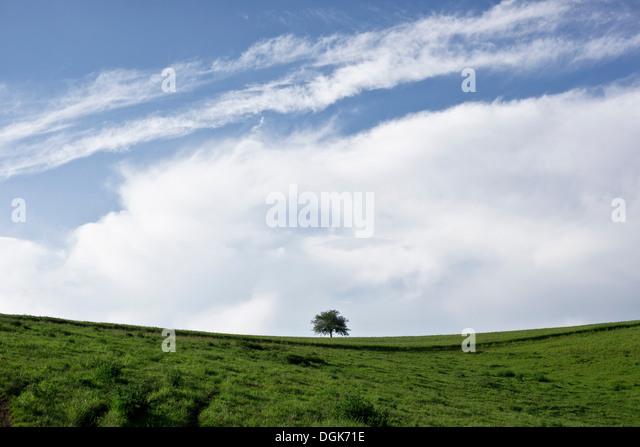 Lone tree in a green field, fisheye perspective - Stock Image