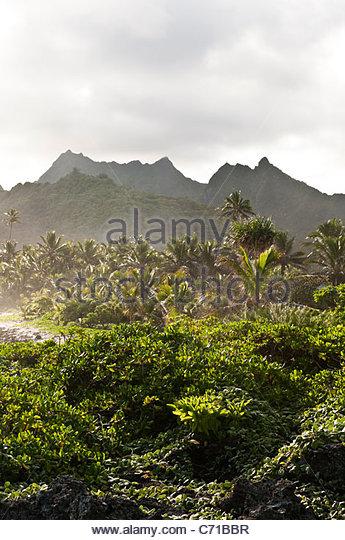 Palm trees and mountains, Rarotonga, Cook Islands. - Stock Image