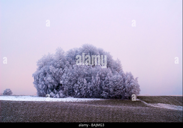 Frozen field and snow - Stock Image