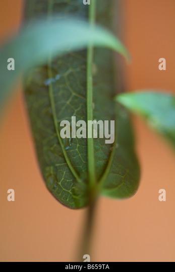 Underside of leaf with dew drops, close-up - Stock-Bilder