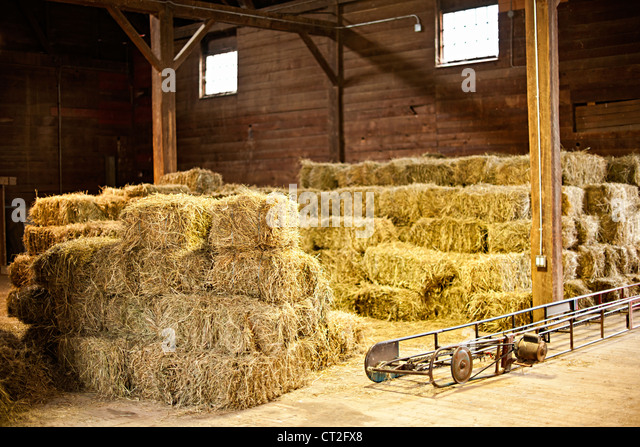 Interior of barn with hay bales stacks and conveyor belt - Stock Image