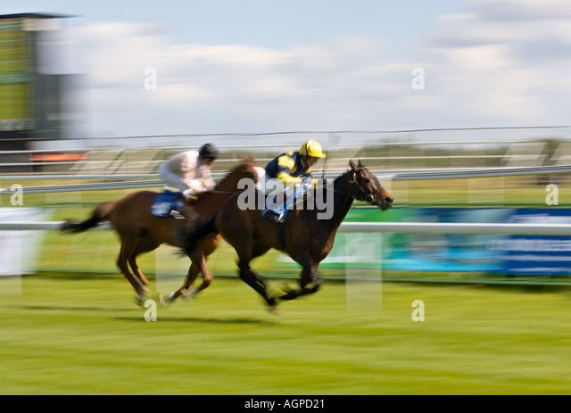 Horses in race for the finishing post - Stock Image