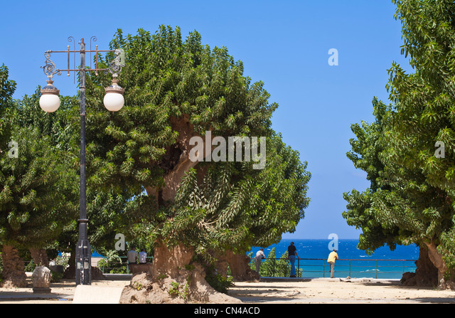 Algeria, Tipaza Wilaya, Cherchell, central square our Martyrs square with Belombra trees (Phytolacca dioica) and - Stock Image