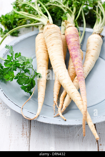 Parsley root - Stock Image