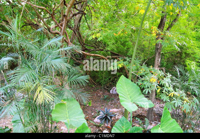 Jungle rainforest Yucatan Mexico Central America plants - Stock Image