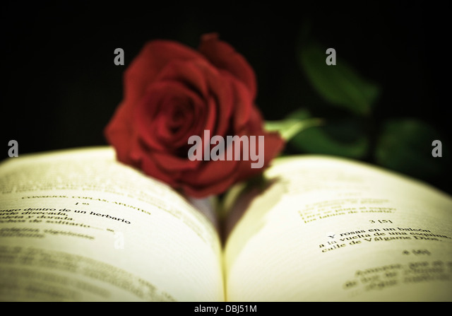Open book with red rose on black background, still life ,poetic,romantic,love,photograph,creative,flower,light - Stock Image