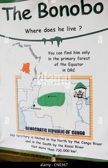 Information on the Bonobo apes in the Lola Ya Sanctuary park in the DRC, Central Africa. - Stock-Bilder