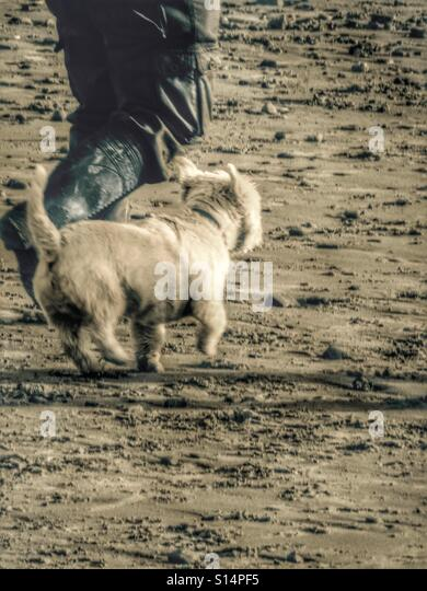 Dog Walking In Aberdeenshire