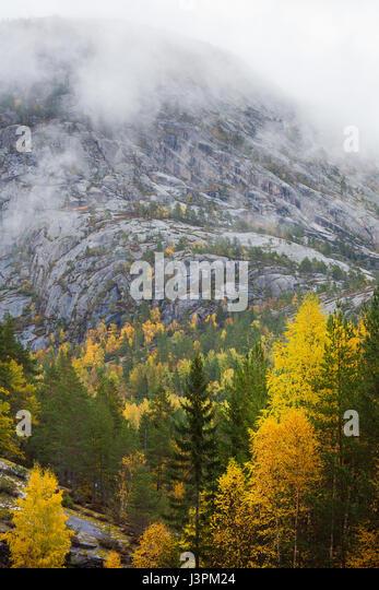 Autumn colors on a rainy day in Nissedal, Telemark fylke, Norway. - Stock-Bilder