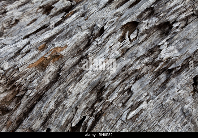Weathering Tree Trunk close up shot for background - Stock-Bilder