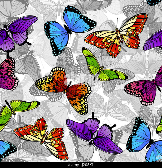 Ornament butterfly colourful colorful stock photos - Butterfly world com table tennis ...