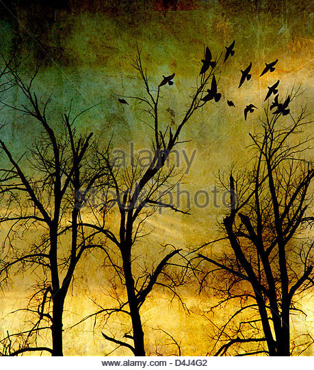 Atmospheric spooky forest with bare branches - Stock-Bilder