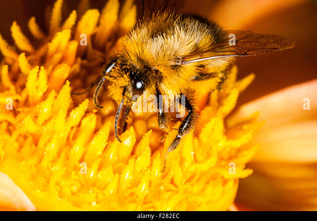 Cross Pollinate Stock Photos & Cross Pollinate Stock ...