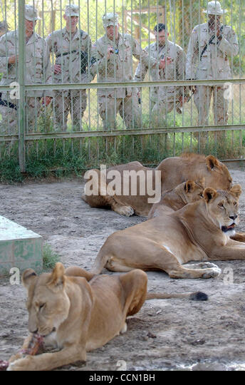 Iraq The Baghdad Zoo Stock Photos & Iraq The Baghdad Zoo ...