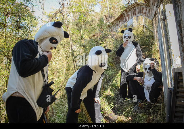Panda keepers lure Yun Tao, into a box so they can move her to the next level of training in the Wolong National - Stock Image