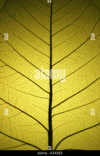 leaf 2 - Stock Image