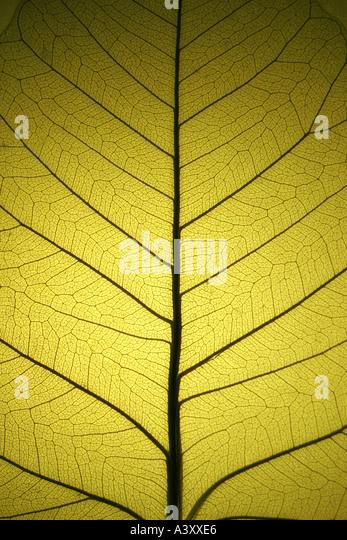 leaf 2 - Stock Image