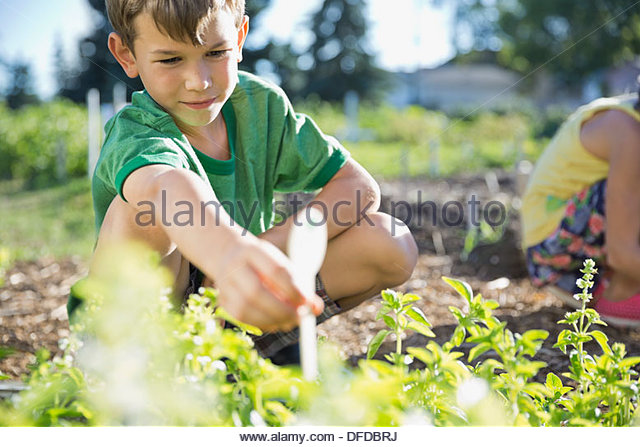 Boy placing plant labels in garden - Stock Image