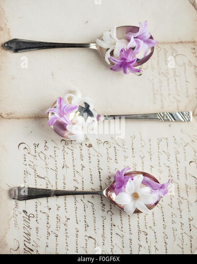 hyacinths on vintage silver spoons on old letter - Stock-Bilder