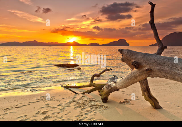 Sunset over the island. Dry tree on the foreground - Stock Image