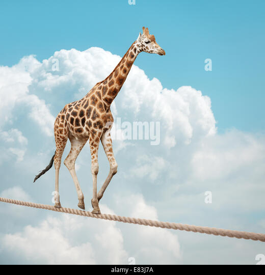 Giraffe balancing on a tightrope - Stock Image