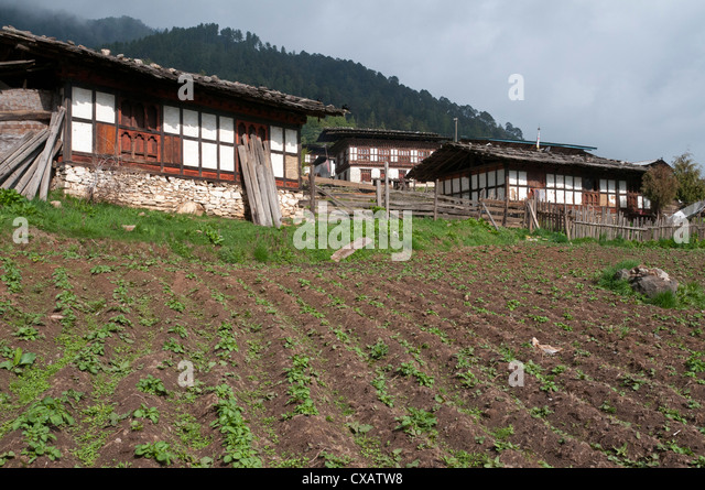 Typical houses with potato fields in Phobjikha valley, Bhutan, Asia - Stock Image