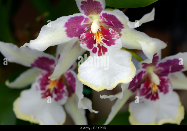 3 Ways to Get Orchids to Bloom - wikiHow