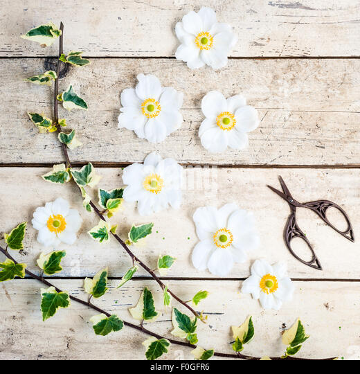 japanese anemones with scissors and ivy - Stock Image