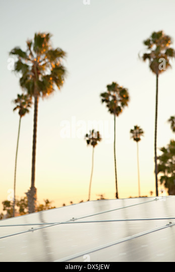 Solar panels against sunset sky with palm trees, California, United States - Stock Image