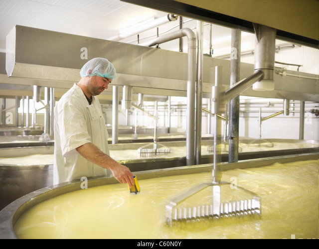 Worker checking milk in cheese factory - Stock Image