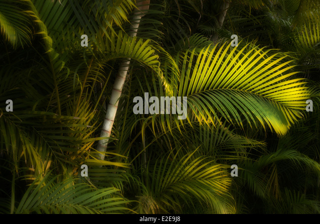 Tropical foliage. Punta Mita, Mexico - Stock Image