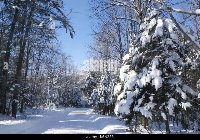 snowmobile-trail-in-the-adirondack-park-