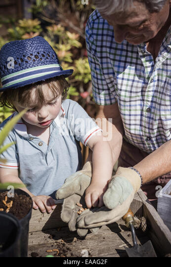 Man and a young child gardening, planting seeds. - Stock Image
