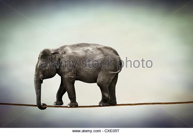 elephant walking tightrope - Stock Image
