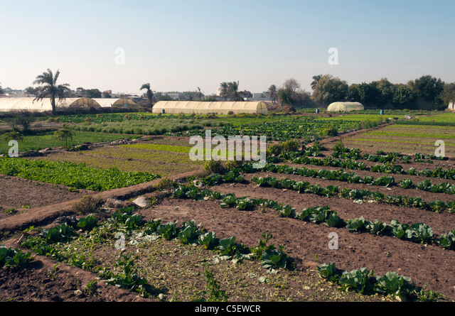 Elk204-1371 Bahrain, Bahrain island, irrigated fields - Stock Image