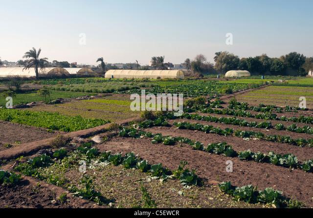 Elk204-1371 Bahrain, Bahrain island, irrigated fields - Stock Image