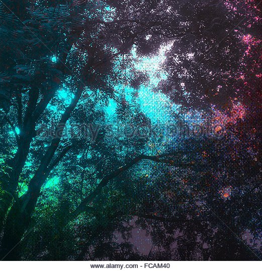 Low Angle View Of Trees Seen Through Glass Window - Stock-Bilder