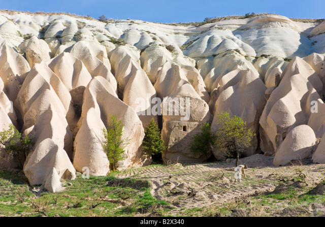 Man tending his vineyard in front of Tufa rock formations in the Rose Valley near Goreme, Anatolia, Turkey, Asia - Stock Image