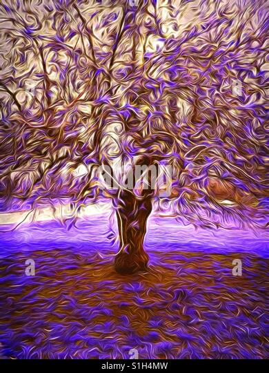 Purple Swirly Tree - Stock Image