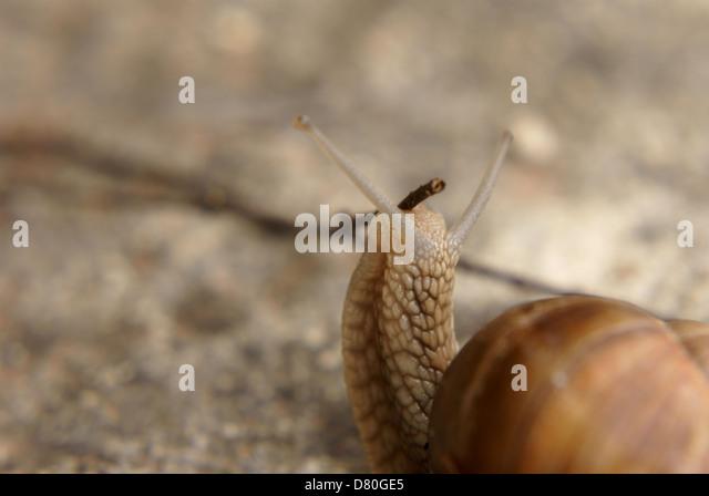 how to cook oreagon triton snail