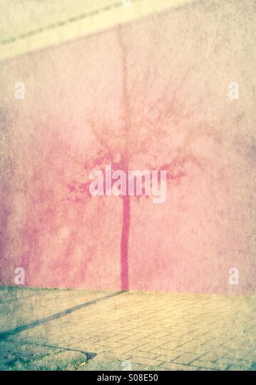 Daguerreotype tree - concrete jungle - a shadow of a tree - Stock-Bilder