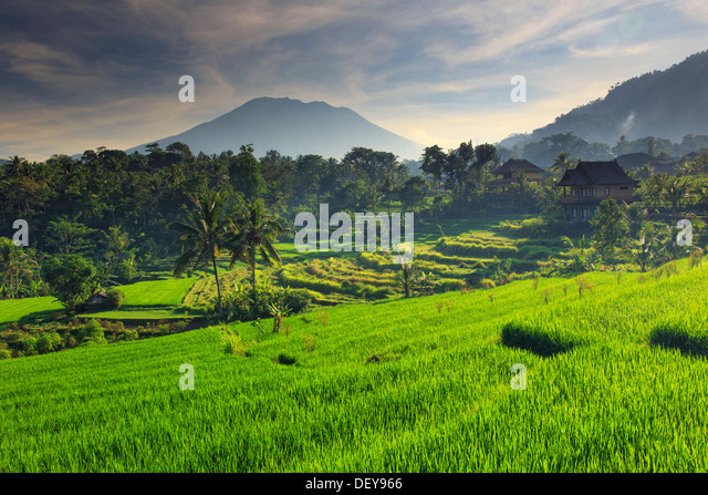 Indonesia, Bali, Sidemen Valley, Rice Fields and Gunung Agung Volcano - Stock Image