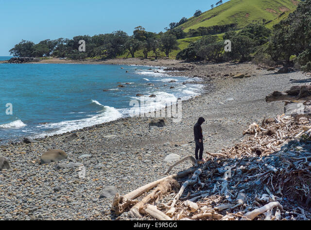 Man alone on New Zealand coastline near Amodeo Bay, Coromandel Peninsular, New Zealand - Stock Image