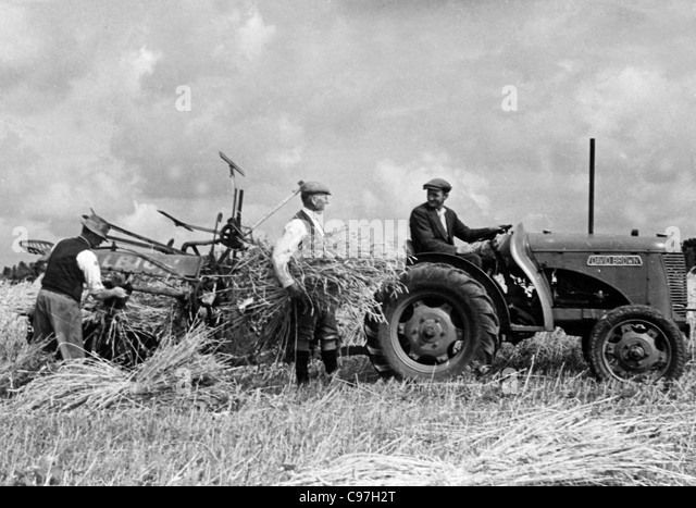 Vintage David Brown tractor with a binder 1940's - Stock Image