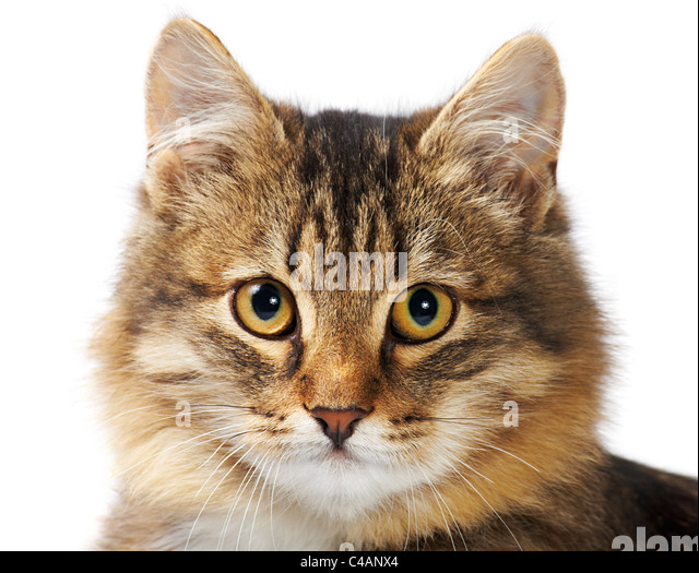 cat tape square
