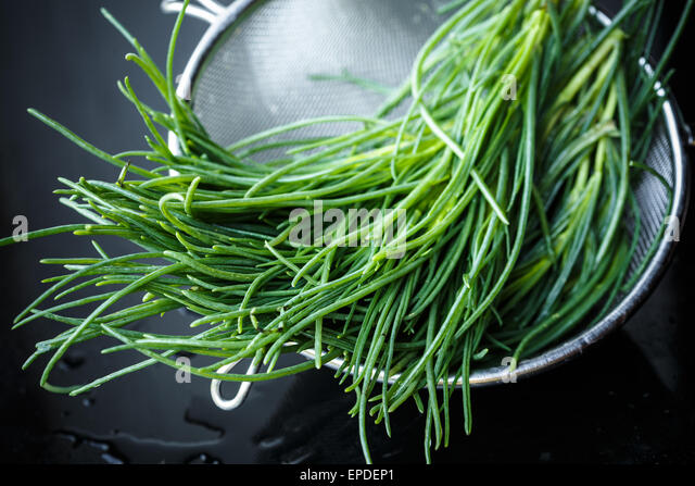 Bunch of Barba di frate (Salsola soda, Saltwort) - Stock Image