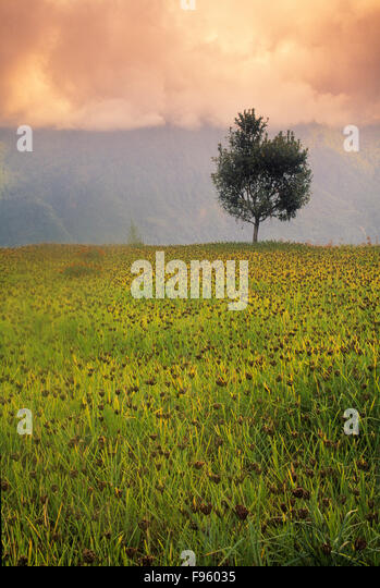 Cropland on the Annapurna Circuit, Nepal - Stock Image