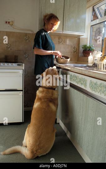 boy feeding his dog - Stock Image