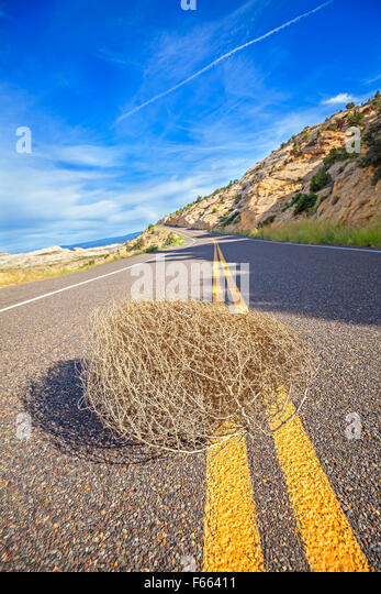 Tumbleweed on an empty road, travel concept picture, shallow depth of field, USA. - Stock-Bilder